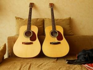 kytary a pes upr